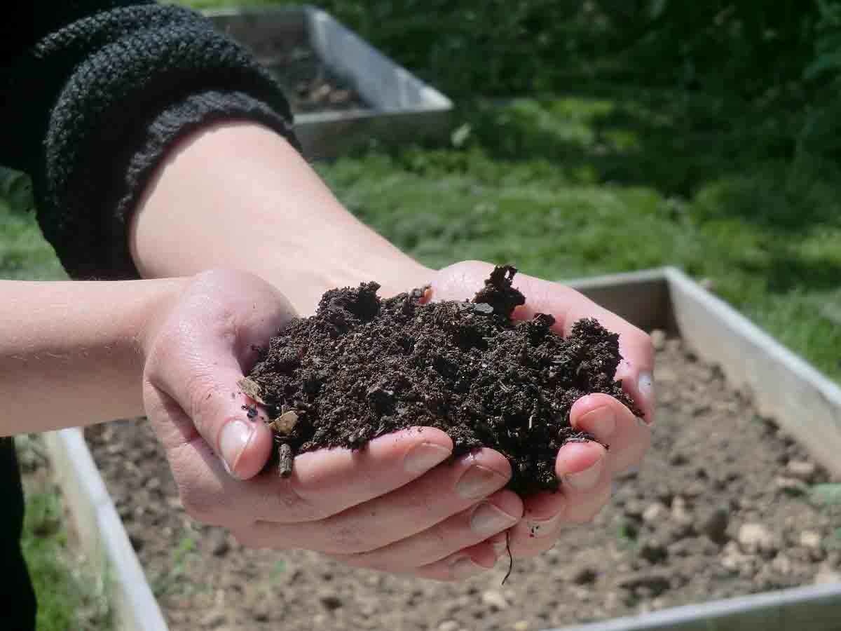 mains jointes qui tiennent de la terre pour le compostage